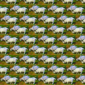 Goats in meadow