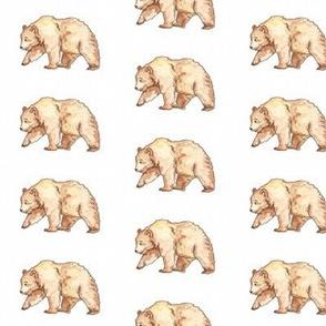 Honey Bear watercolour