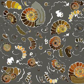 Limestone  extra ammonites in  grey MEDIUM