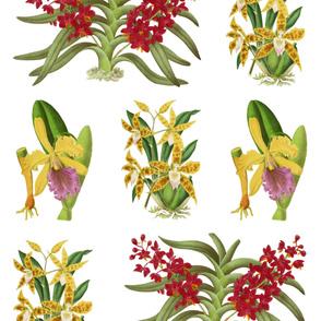 Vintage Orchid Illustrations