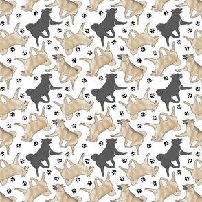 Trotting Norwegian Buhunds and paw prints - white