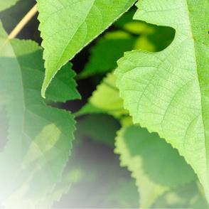 Leaf_03L