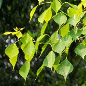 Leaf_04L