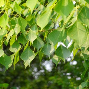 Leaf_04R