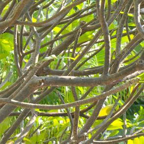 Tree_01
