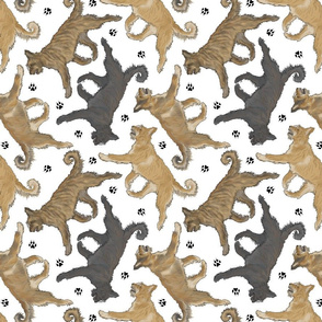 Trotting Berger Picard and paw prints - white