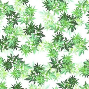 Spring Green Clones