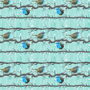 Tiny blue wrens