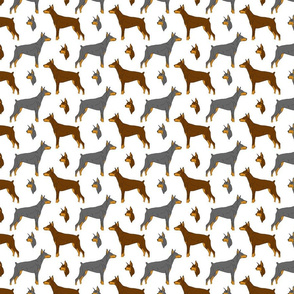 Dobermans - small white
