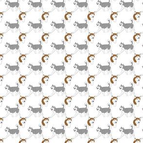 Siberian Huskies - small white