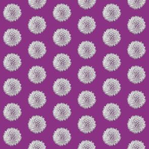 Mini Purple Dandelions