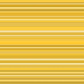 golden beryl stripe