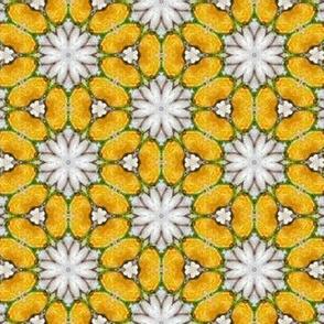 Yellow, White Flowers