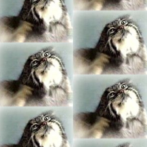 The Itchy Manul