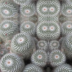 Cactus_Swirl