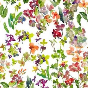 Mix Orchids
