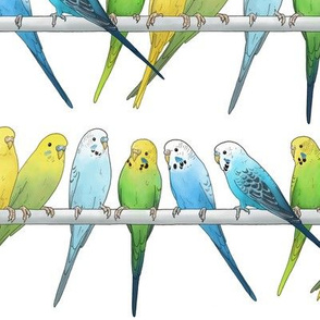 Rows of Colourful Budgies - larger scale
