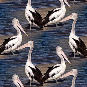 pelicans - fabric