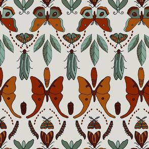 Moth Lifecycle - lg
