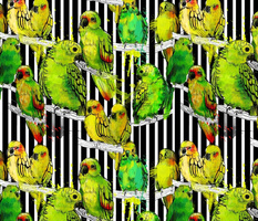 watercolor parrots and black stripes
