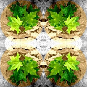 Maple Leaf Lace