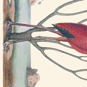 Pre-Linnean Flamingo Border Print ~ Queen Anne's Lace