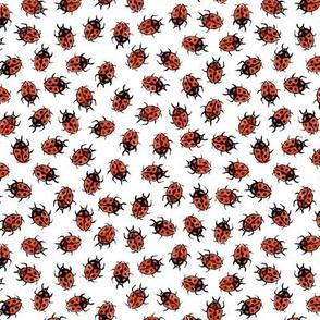 dot red ladybugs