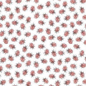 pale ladybugs - grey and coral