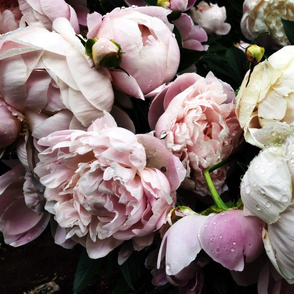 Dark Floral 5