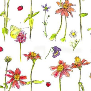 Red Zinnia Wildflowers