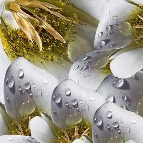 Mariposa Dewdrop Cascade 1