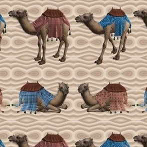 Rows of Camels