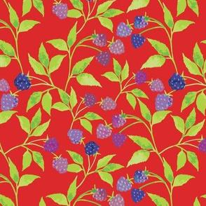 Blackberries Red