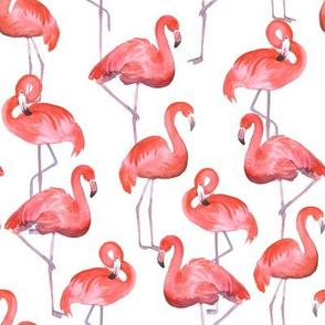 Flamingo (medium scale)