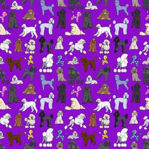 poodles_purple