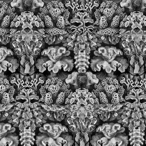 Haeckel Aquatica ~ Coral ~ Small
