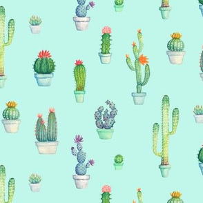 Cactus Practice
