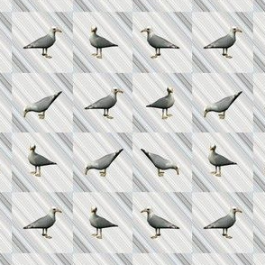 Seagulls on Gray