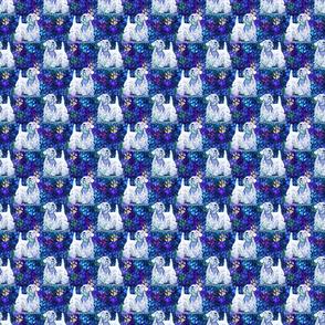 Cosmic posing Sealyham Terrier - night