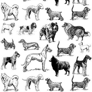 dogs - toile