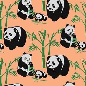 panda familys