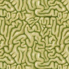 Olive Brains