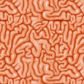 Orange Brains