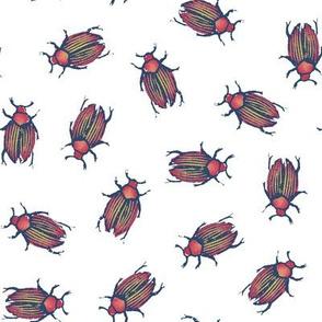 beetles for Matisse