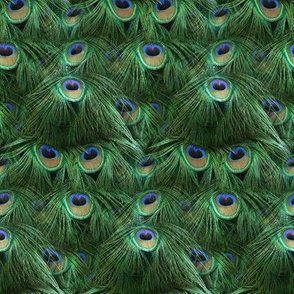 Tale of the Peacock Tail ~ Small