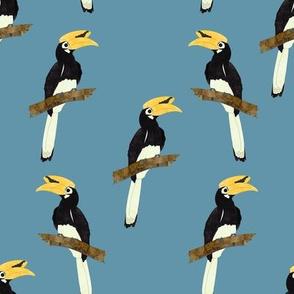Male Pied hornbill