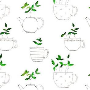 Tea plants in tea cups