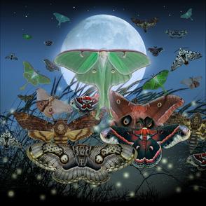 Luna Nocturne