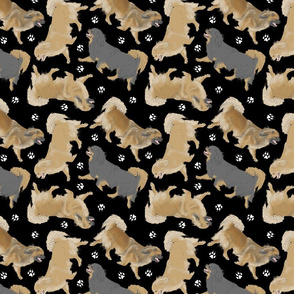 Trotting Tibetan Spaniels and paw prints - black