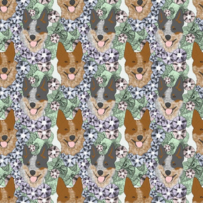 Floral Australian cattle dog portraits